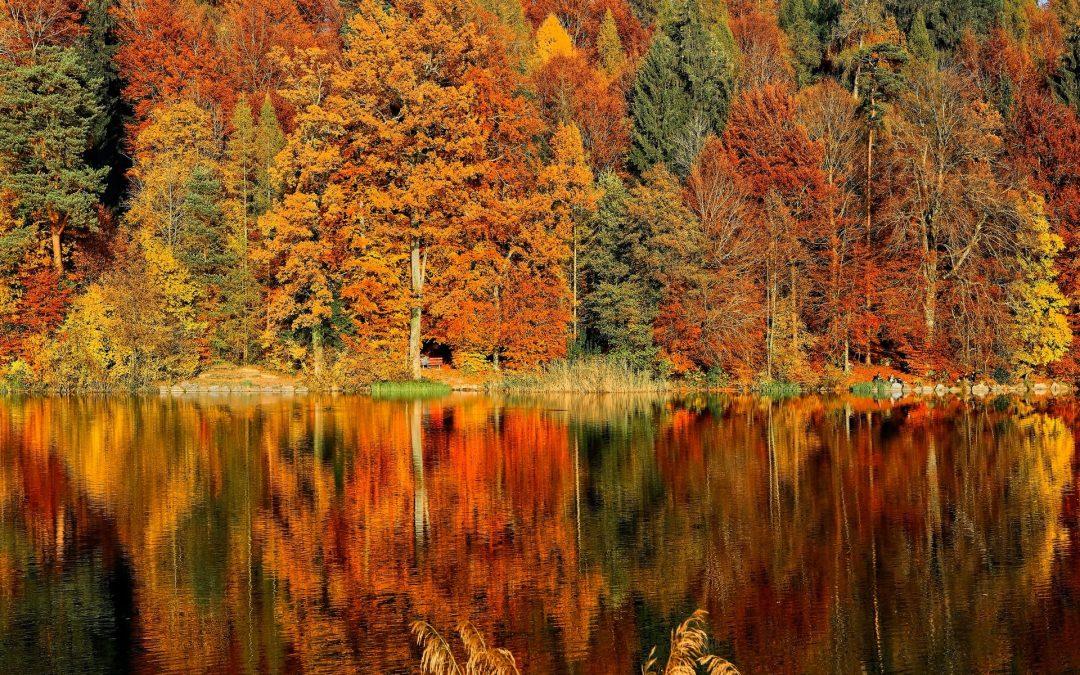 Coastal Home Maintenance Tips for Fall
