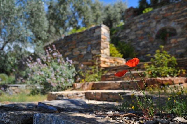 Landscaping Tips for the Texas Coastal Bend Area